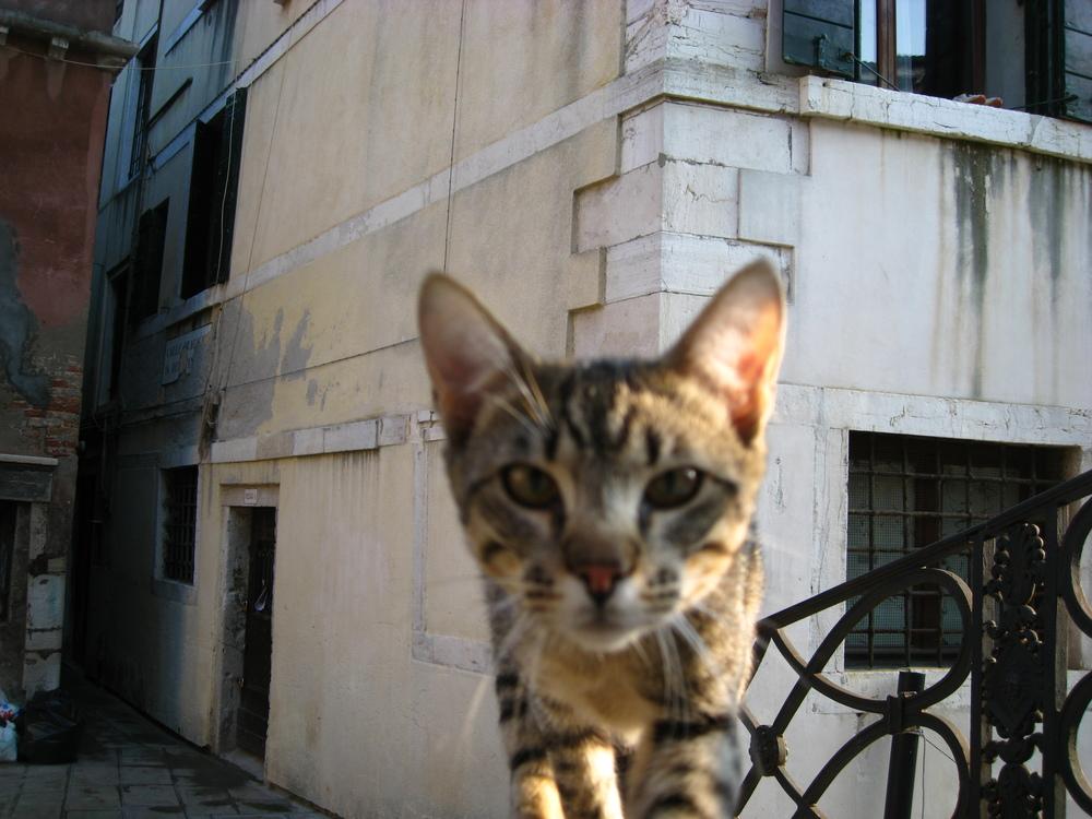 Venise chat